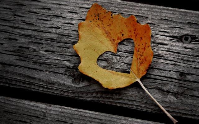 http://fr.forwallpaper.com/wallpaper/autumn-love-wallpapers-753418.html