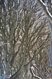 Roadtrip en Irlande du Nord - Dark Hedges